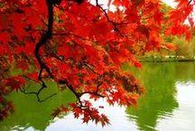 autumn / idzie jesień