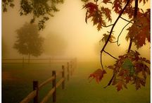 It's Fall Y'all / by Teresa Buckland