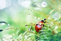 Insect / by Yoshihiro Ogawa