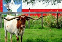 Texas / The Lone Star State