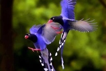 Feathered Friends / I've always been fascinated by birds--there are so many varieties, so many colors and shapes and they're fun to watch. / by Tina Brosseau
