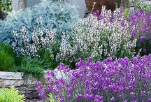 Gardens / by Jane Saunders