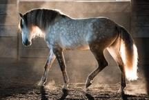 Horses / by Jessica Gordon