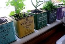 Container Gardening / Tips and projects related to growing plants in containers as accents to a larger garden or as a small-space garden all their own. / by Horticulture Magazine
