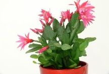 Houseplants / Growing plants indoors. / by Horticulture Magazine