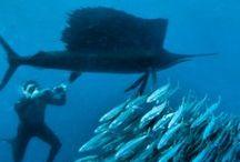 Submarinas / Fotos submarinas, animales, pecios y paisajes