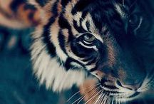 Animals Rule! / by Gretchen VonMonster