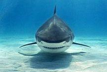 SHARK!!!! / by Gretchen VonMonster