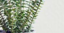 * Green Grow *