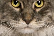 Cats / by Paula McKeeton Hemingway Chirillo