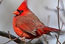 richie birds