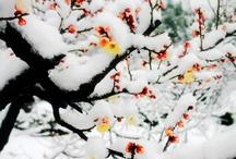 Winter / by Kathie Spargo