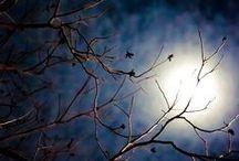 Moon love.