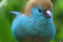Birds / by Clarissa Perrot