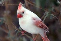 Pretty Birdy / by Aimee Hill-Huffman