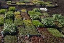 Gardens & Flowers / Il giardino che vorrei