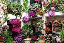 Patios Andaluces