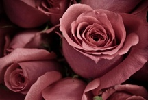 Dusty Rose Summer