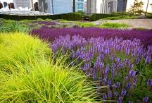 Piet Oudolf Gardens / by Diane StJohn