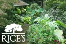 Plants / These colorful plants are great additions to any garden or landscape! / by Rice's