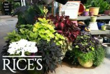 Containers / Add a touch of elegance to your outdoor space with these beautiful plant containers. / by Rice's