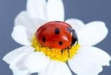 Ladybugs! / by Leah Feisel