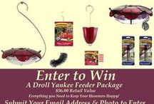 Hummingbird Guide Contests / The Hummingbird Guide Photo Contest. Submit your hummingbird photo to Win a Complete Droll Yankees Hummingbird Feeder Package. Contest starts Saturday, August 15, 2015.