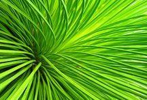 ✧ GREEN ✧