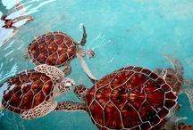 Animals I Love / by Brittany Blackman
