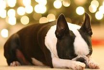 Stella Pup / by Kimber