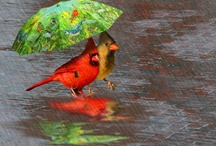 Rain / by Alice Work