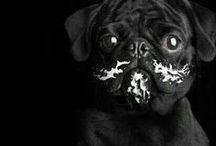 Kitty 'n puppy / #cat #dog #kitty # puppy / by Ladislas Bryla