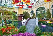 Bellagio Conservatory Las Vega / by Maury Hill