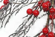 """SEASONS:: Winter & Christmas / Too many Christmas decorations are very much just """"winter"""" to be able to keep these boards separate, so I have them as one.  Find #winter and #Christmas #decorations, #food, #traditions, #activities, etc. / by Rachel Ramey (Titus 2 Homemaker)"""