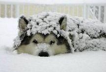 Fur Babies!!! / by Diann Noggle