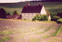 Selina Lake - Lavender & Lilac