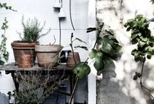 Conservatory / Indoor plants, greenhouses, conservatories, green life, inside gardening, and house plant inspiration.