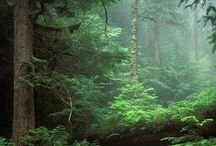 The Woods / Images and peaceful hikes and paths from the woods, forest, and other bunches of trees and greenery.