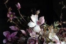 flowercollege / by stacey downey-sterrett