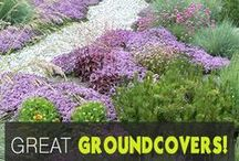 Landscaping Ideas / Landscape ideas abound! Find landscaping ideas for your entire yard including front yard landscaping and backyard ideas. Make your yard look its absolute best with our collection of tips and tricks.