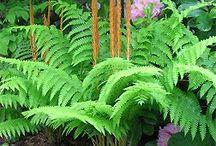 Fern Gully / Ferns and shade plants