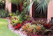 Tropical Zone / Tropical plants