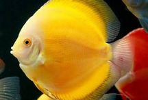 Aquarium / Fish and aquatic plants