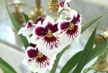 Orchids / Orchid care