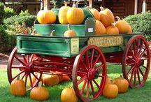 Holiday-Fall/Thanksgiving / by Teresa Penny
