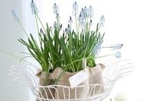 *Spring