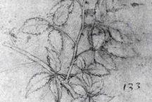 Botanicals / by Karen Ruble