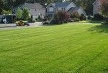 Luscious Lawn Care / Enjoy a Happy & Healthy lawn! Our lawn care program is important in sustaining a beautiful property. Lawn maintenance programs are typically 28-32 weeks, starting in March & ending in December. Spring Clean Up starts the season & ends with a Fall Clean Up. In addition, we offer a 7 step fertilization program which is crucial to provide essential nutrients for sustaining a healthy, green, weed & pest free lawn.  We are certified and licensed by the N.Y.S. Department of Environmental Conservation.