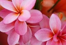 Flowers / by Debbie Norris