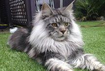 Pretty Kitties / by Debbie Norris